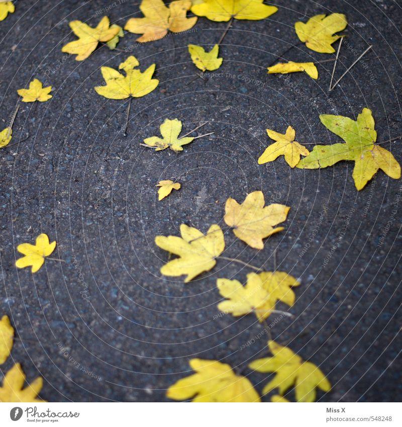Sterne Himmel Nachthimmel Herbst Blatt Straße blau gelb Stern (Symbol) Sternenhimmel Sternenzelt Ahornblatt Herbstlaub Herbstfärbung herbstlich Asphalt