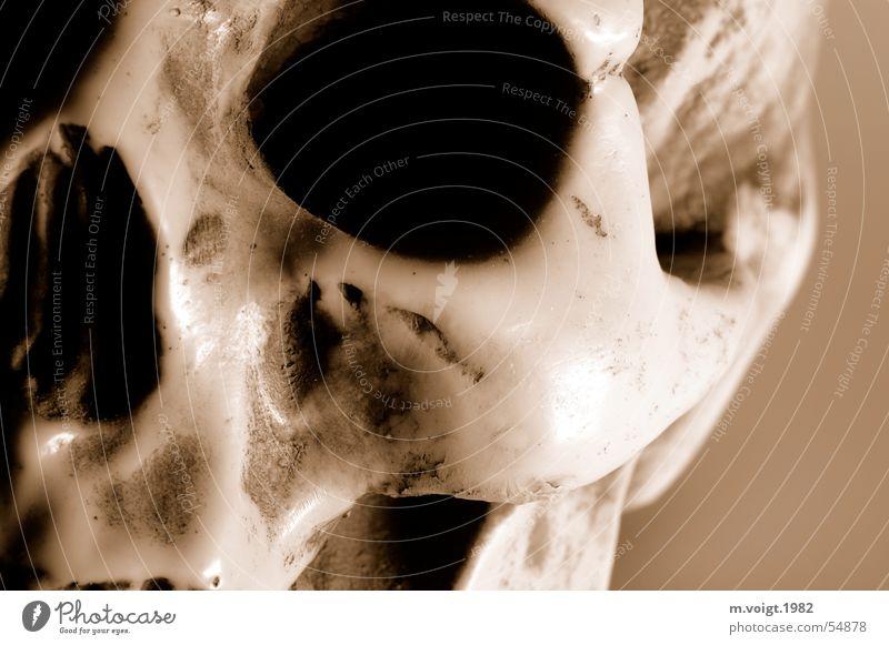Schädel Nahaufnahme Detailaufnahme Kunstlicht Kopf Auge Skelett Wange Skulptur Kitsch Krimskrams Souvenir dunkel gruselig trashig braun Tod Nasenbein Gips