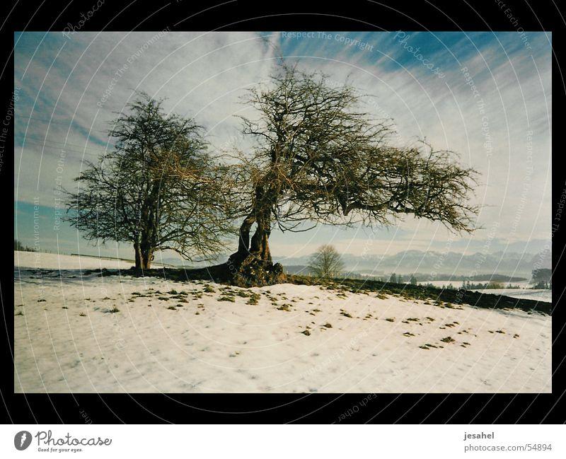 winterbäume_kraichgau_01 Baum Wolken Ferne Schneelandschaft Kraichgau
