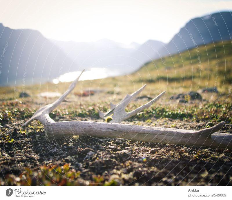 lost & found Natur Landschaft ruhig Berge u. Gebirge Leben Wiese See Stimmung liegen authentisch Zukunft Unendlichkeit Wunsch Verfall Moos werfen