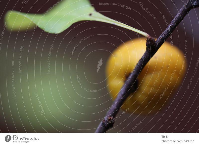 Pflanze Natur schön grün Blatt gelb Umwelt Herbst Zufriedenheit authentisch ästhetisch einzigartig Gelassenheit harmonisch Gleichgewicht Reinheit