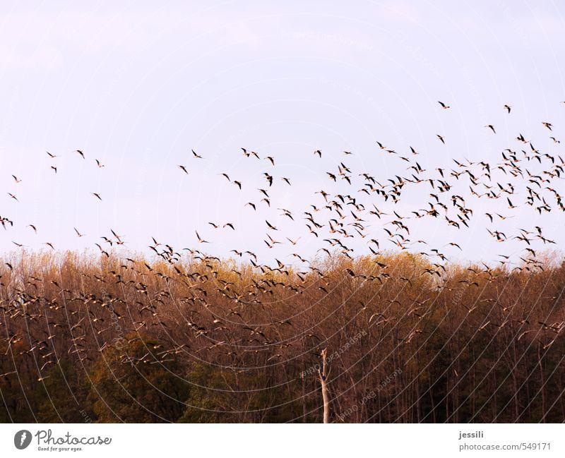 Los Himmel Pflanze Baum Landschaft Tier gelb Herbst Bewegung braun Vogel fliegen Zusammensein Feld Wildtier Luftverkehr beobachten
