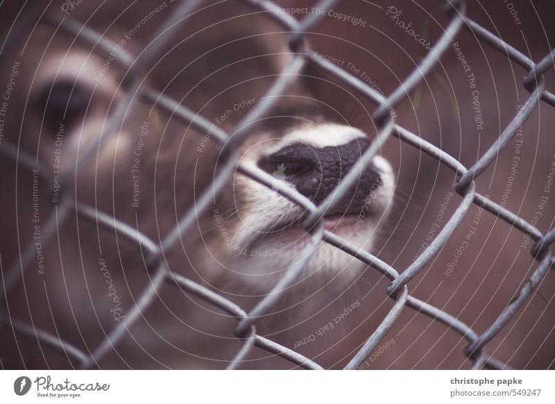Hinter Gittern Tier Wildtier warten niedlich Neugier Landwirtschaft Zaun Tiergesicht Zoo Fressen gefangen frech Forstwirtschaft Nutztier füttern Reh