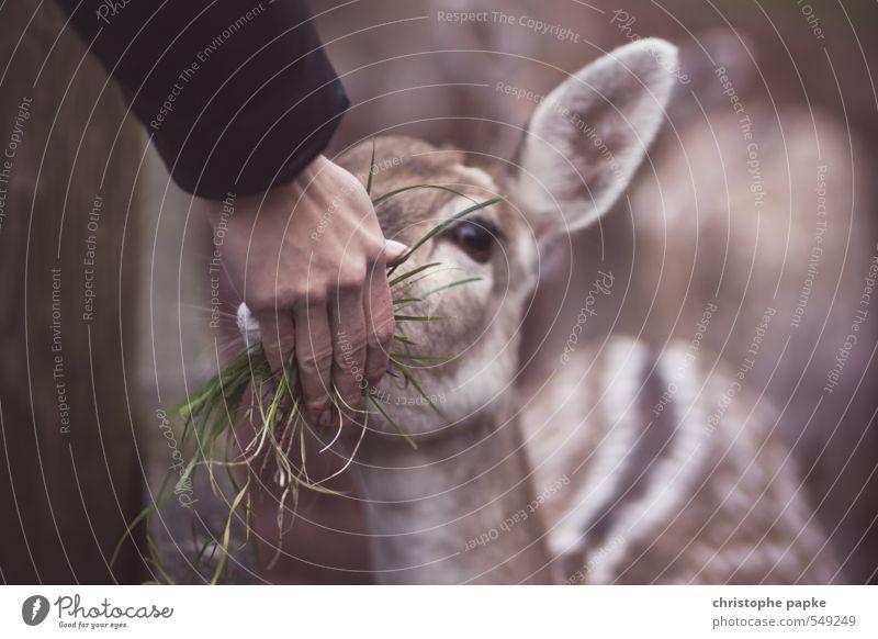 Don't feed the troll - feed bambi! Landwirtschaft Forstwirtschaft feminin Hand 1 Mensch Feld Tier Nutztier Wildtier Tiergesicht Zoo Streichelzoo Reh Rehkitz
