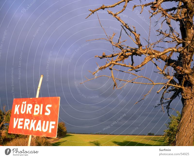 Kürbisschild Wiese Baum Himmel Ast Schilder & Markierungen