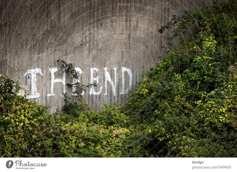 ..of LD is the beginning of new creations Sommer Pflanze Sträucher Grünpflanze Mauer Wand Beton Schriftzeichen Graffiti Wachstum authentisch Originalität grau