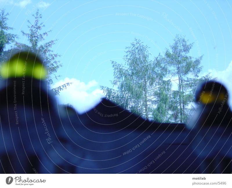 invasion-camp III Himmel Baum blau gelb Fototechnik