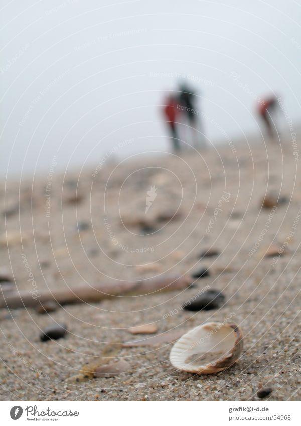 muschel am strand Strand Meer Winter Unschärfe Tag nah Muschel Suche Mensch Paar mehrere Stein Sand tief Detailaufnahme Spaziergang paarweise