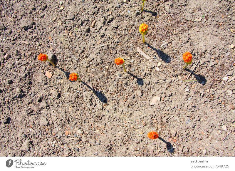 Sechs Blumen Farbe Sonne Landschaft Farbstoff Frühling Blüte Sand orange Erde Beginn Boden Blühend Grundbesitz exotisch Abheben