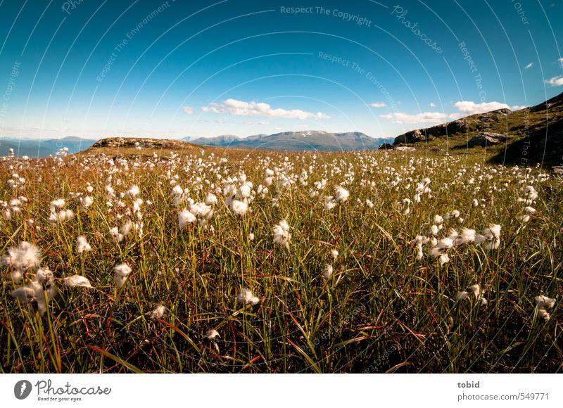 Norway No.2 Natur Ferien & Urlaub & Reisen blau grün Pflanze Sommer Sonne Landschaft Wolken Ferne gelb Berge u. Gebirge Gras Freiheit Horizont Sträucher