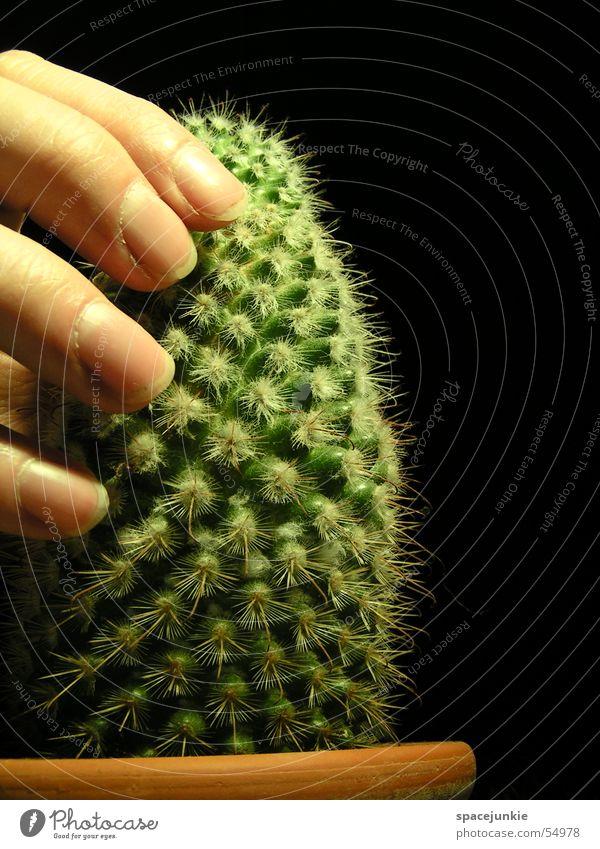 Stachelig Kaktus grün Keramik Topf Hand stachelig Schmerz weiße stacheln