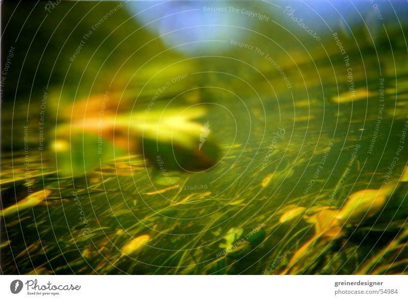 Unter Wasser 2 Seerosen Seegras Unterwasserpflanze Bach Blatt Lichtbrechung unterwsserwelt Pflanze Fluss ströhmung