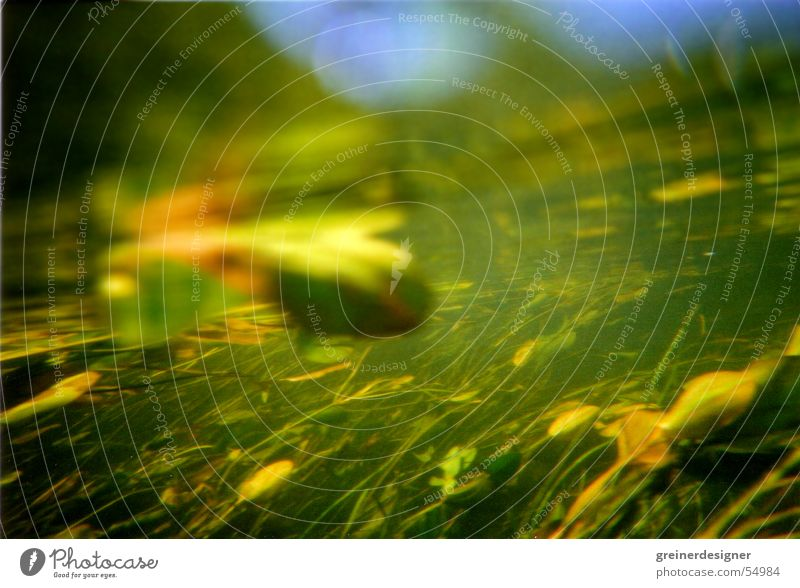 Unter Wasser 2 Pflanze Blatt See Fluss Bach Lichtbrechung Seerosen Seegras Unterwasserpflanze
