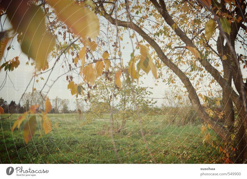 nach dem herbst kam der ... Umwelt Natur Landschaft Himmel Herbst Klima Wetter Baum Gras Blatt Feld Idylle Geäst Außenaufnahme herbstlich Farbfoto