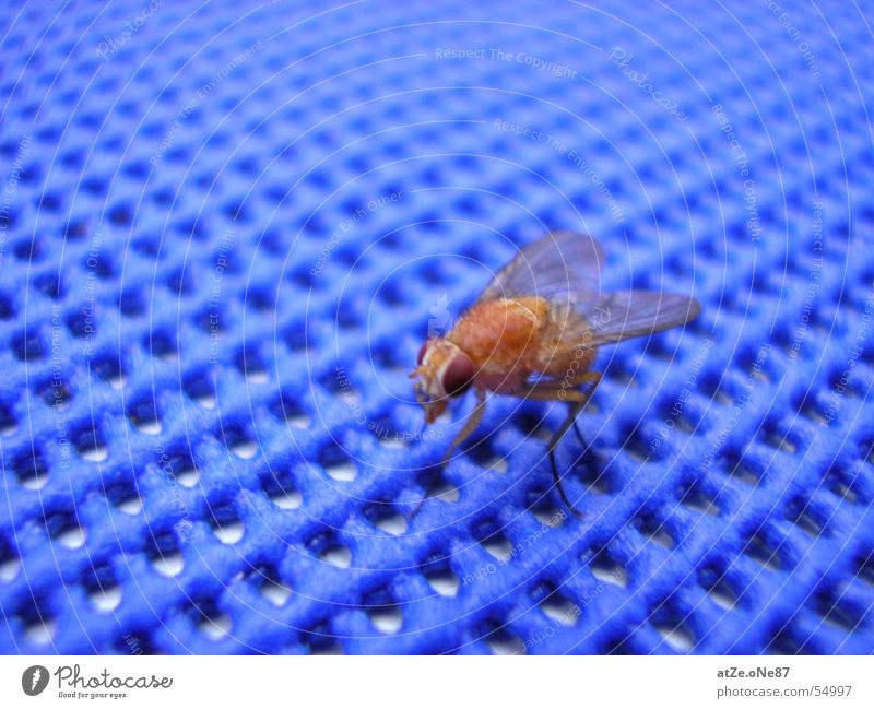 ...diE fLieGe Nahaufnahme Gitter Fliege fliegen blau Netz fly net