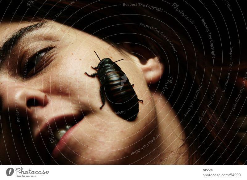cockroach Schiffsbug Schaben Gemeine Küchenschabe Insekt Frau face woman female black-beetle insect