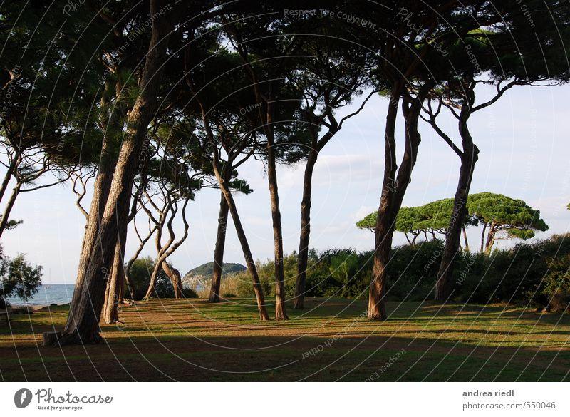 Golfo Ferien & Urlaub & Reisen Sightseeing Sommerurlaub Strand Meer Umwelt Natur Landschaft Pflanze Wasser Himmel Schönes Wetter Baum Gras Wildpflanze Wiese