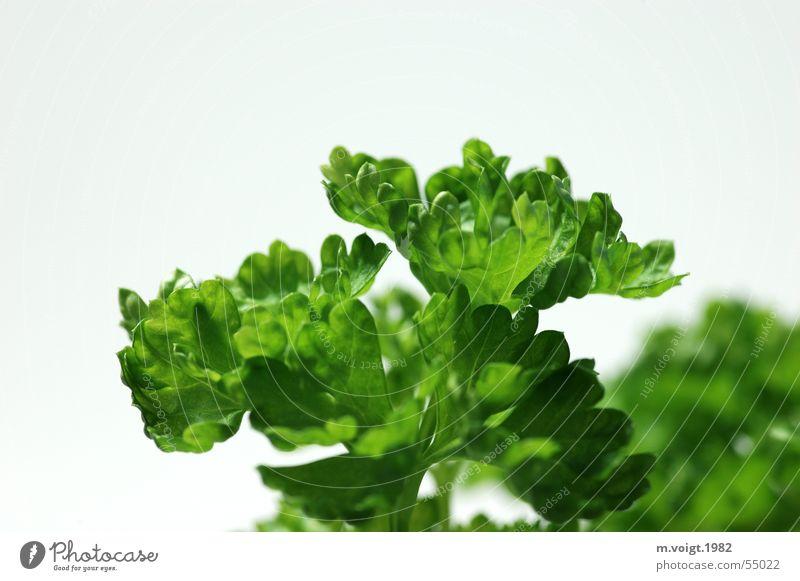 Gesundes Grün grün Pflanze Blatt Gesundheit Lebensmittel ästhetisch Kochen & Garen & Backen Küche Kräuter & Gewürze lecker Vitamin saftig Nutzpflanze Petersilie