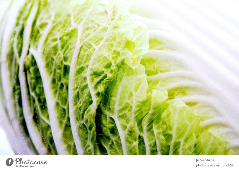 Made in China Lebensmittel Gemüse Salat Salatbeilage Ernährung Gesundheit Pflanze Blatt frisch Chinakohl Pekingkohl Pak Choy Selleriekohl Kohl Vitamin