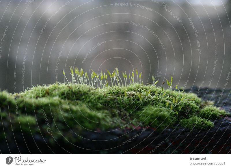 Einfach Moos... Baum Makroaufnahme Pflanze Wald Gras Wiese Baumstamm grün Der kleine Hobbit Waldarbeiter Kresse Grünpflanze Natur Haare & Frisuren
