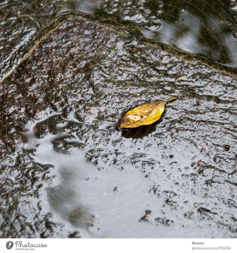 Für die einen ein unscheinbares Blättchen,... Natur Pflanze Wasser Wassertropfen Herbst schlechtes Wetter Regen Blatt Herbstlaub Terrasse Zeichen Pfütze liegen