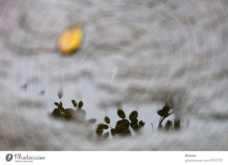 blasse Erinnerung Natur Wasser Pflanze Baum Blatt gelb dunkel Traurigkeit Herbst Tod grau Stein Garten Regen trist nass
