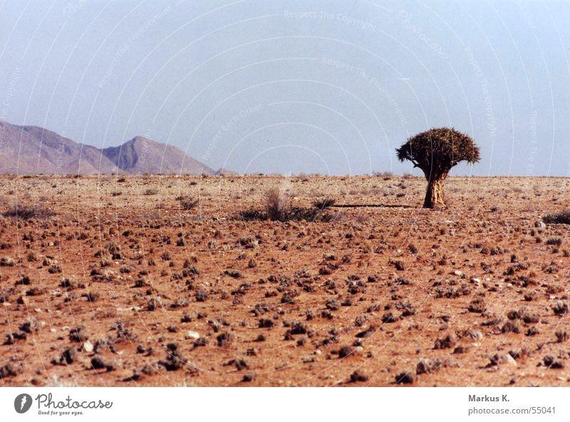 Köcherbaum Baum Einsamkeit Berge u. Gebirge Wärme Erde Afrika Wüste Physik heiß Pfeil trocken Durst Bogen Namibia karg