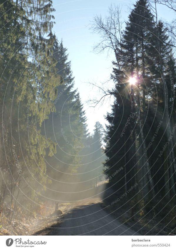 Lichtstrahlen | Wegweiser Himmel Natur Sonne Baum Landschaft ruhig Winter Wald Umwelt Herbst Wege & Pfade hell Stimmung Erde Kraft Nebel