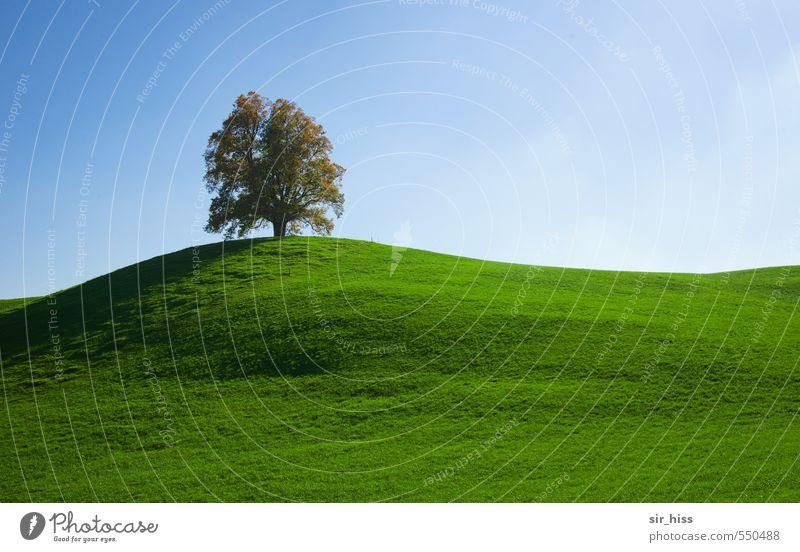 Ein Baum, ein Sohn grün Baum Erholung Einsamkeit Landschaft Ferne Wärme Freiheit Glück Horizont Park leuchten fantastisch Lebensfreude Hügel Sehnsucht