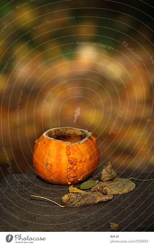 happy birthday photocase | und immer schön weiterleuchten... Natur ruhig Blatt Herbst Feste & Feiern Garten Freizeit & Hobby glänzend Häusliches Leben