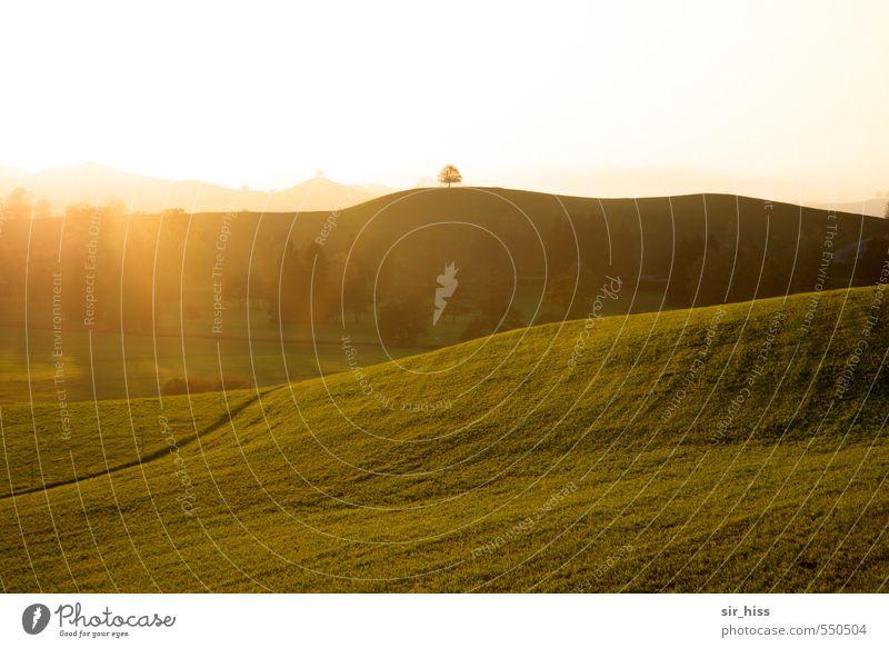 Oktobernebel ist angenehmer Landschaft Horizont Sonnenlicht Herbst Schönes Wetter Nebel Baum Garten Park Wiese Hügel Gipfel ästhetisch Ferne hoch lang weich