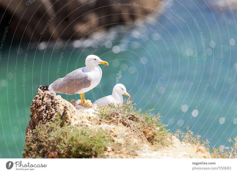PRAIA DOS TRES IRMAOS Natur Ferien & Urlaub & Reisen Meer Erholung ruhig Reisefotografie Küste Freiheit natürlich Felsen Idylle Tourismus Postkarte Bucht