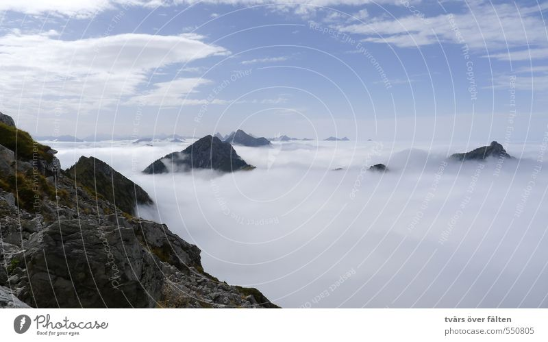 über den Wolken Landschaft Luft Himmel Sommer Schönes Wetter Alpen Berge u. Gebirge Krähe Zufriedenheit Erholung Horizont Leben Leichtigkeit Natur