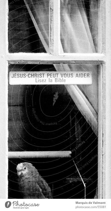 Lest die Bibel ! Fenster Fensterkreuz Vorhang Gardine Einblick Vogel Papageienvogel Käfig Vogelkäfig schwarz weiß Etikett Frankreich Religion & Glaube verrückt