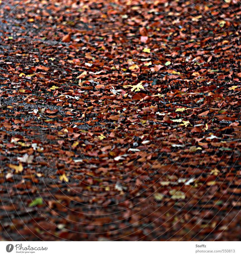 Herbstlaubrauschen auf dem Waldboden Rauschen der Blätter Herbstspaziergang warme Brauntöne melancholisch Herbstfärbung Herbstwald Novemberstimmung Waldweg