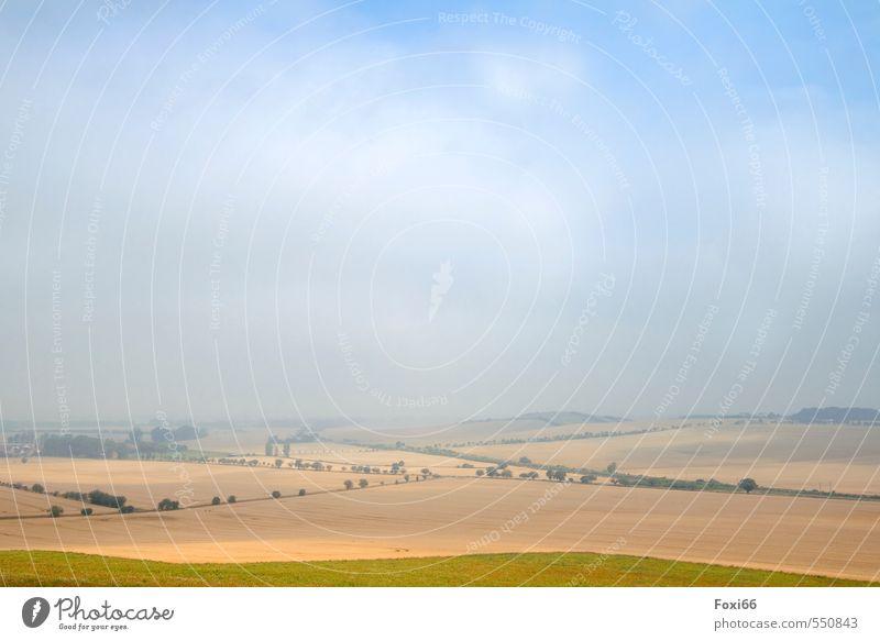 Frühnebel Himmel blau schön grün Baum Einsamkeit Landschaft ruhig Wolken gelb kalt Herbst natürlich Feld Nebel Sträucher