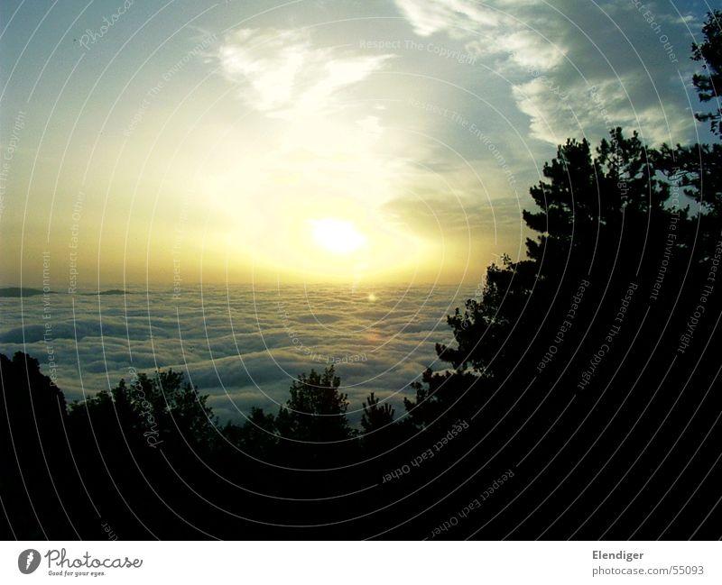 Sonnenaufgang über den Wolken Licht Wald Baum Himmel Pyrenäen Morgen hell sun sky light morning sunrise