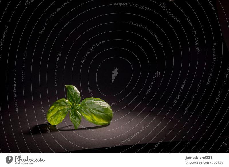 Basilikum im Licht Kräuter & Gewürze Italienische Küche Gastronomie Pflanze Essen frisch Basilikumblatt Pesto Farbfoto Studioaufnahme Detailaufnahme