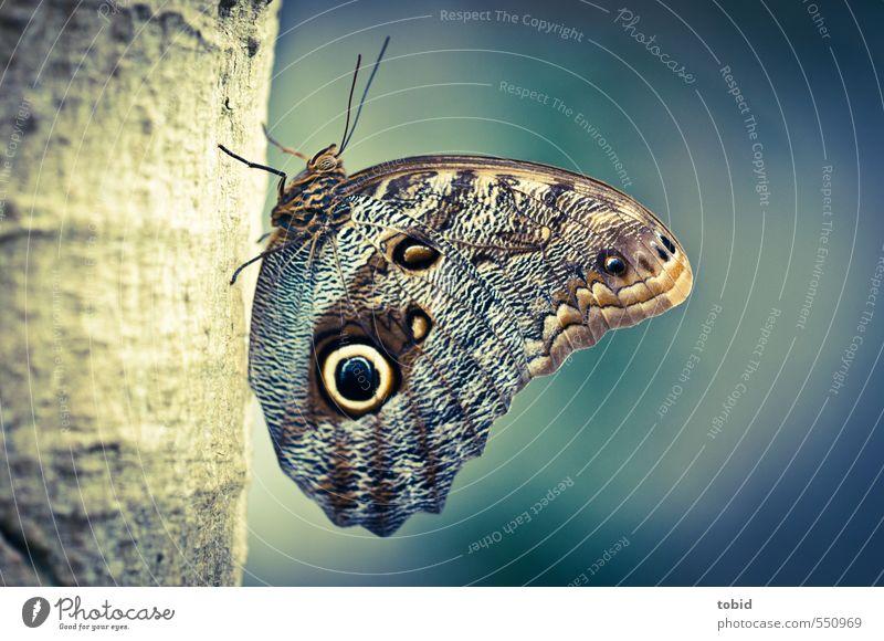 Butterfly No.3 Baum Baumstamm Tier Schmetterling Flügel 1 hocken ästhetisch blau braun gelb Farbfoto Gedeckte Farben Außenaufnahme Detailaufnahme Makroaufnahme