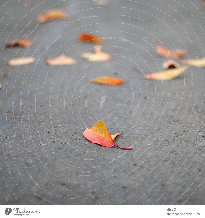 Ein Blatt Herbst Straße Wege & Pfade Beton dehydrieren gelb rot Herbstlaub Asphalt Herbstbeginn Herbstfärbung herbstlich Farbfoto mehrfarbig Außenaufnahme