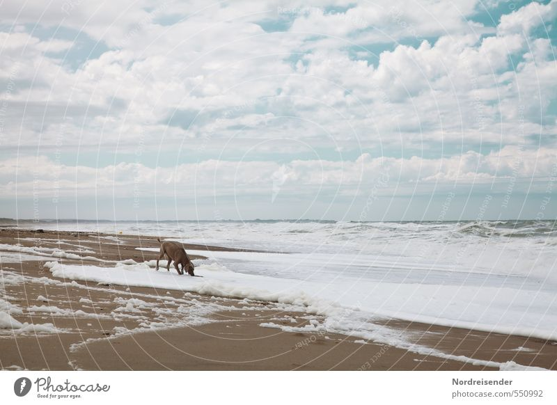 Brandung Leben Sinnesorgane Ferien & Urlaub & Reisen Ausflug Strand Meer Natur Landschaft Urelemente Sand Wasser Himmel Wolken Klima Wind Sturm Wellen Küste