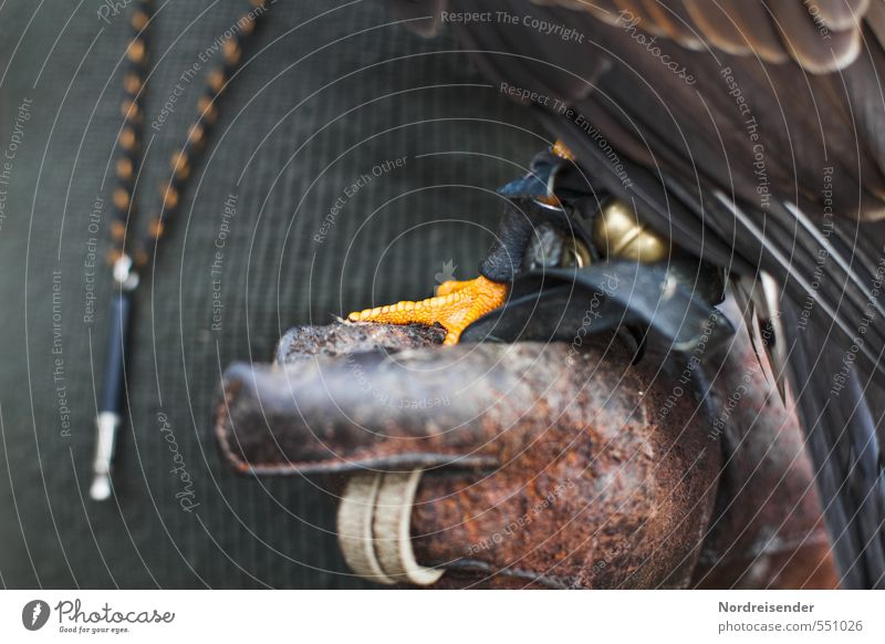 Harris Hawk Mensch Hand Tier Vogel Freizeit & Hobby Kraft Finger Jagd Tradition Leder Handschuhe Jäger kompetent