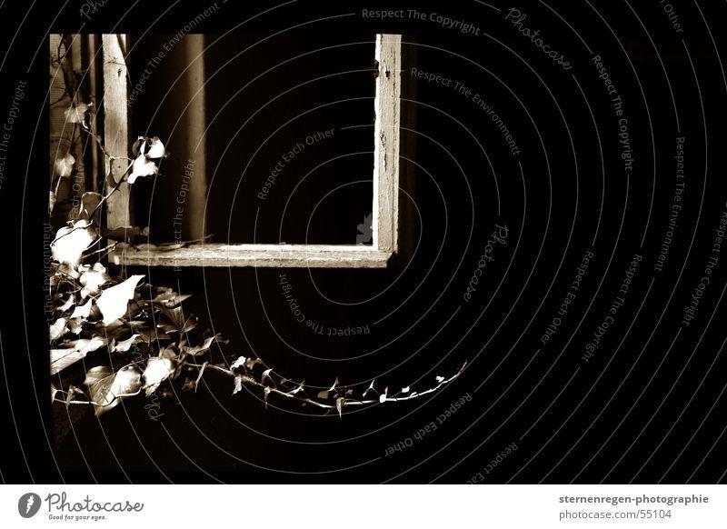 windows alt schwarz Fenster Zeit einfach Vergänglichkeit Verfall Lack Sepia Efeu Schnörkel