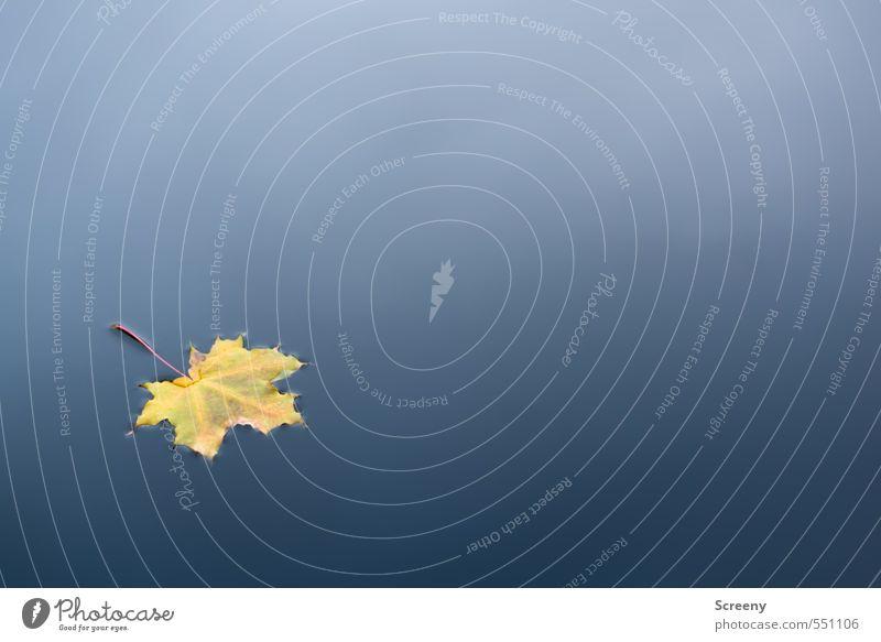 Stille Ausflug Herbstlaub Umwelt Natur Wasser Blatt Ahorn Teich See Schwimmen & Baden blau gelb Stimmung Gelassenheit ruhig Reinheit Farbfoto Außenaufnahme
