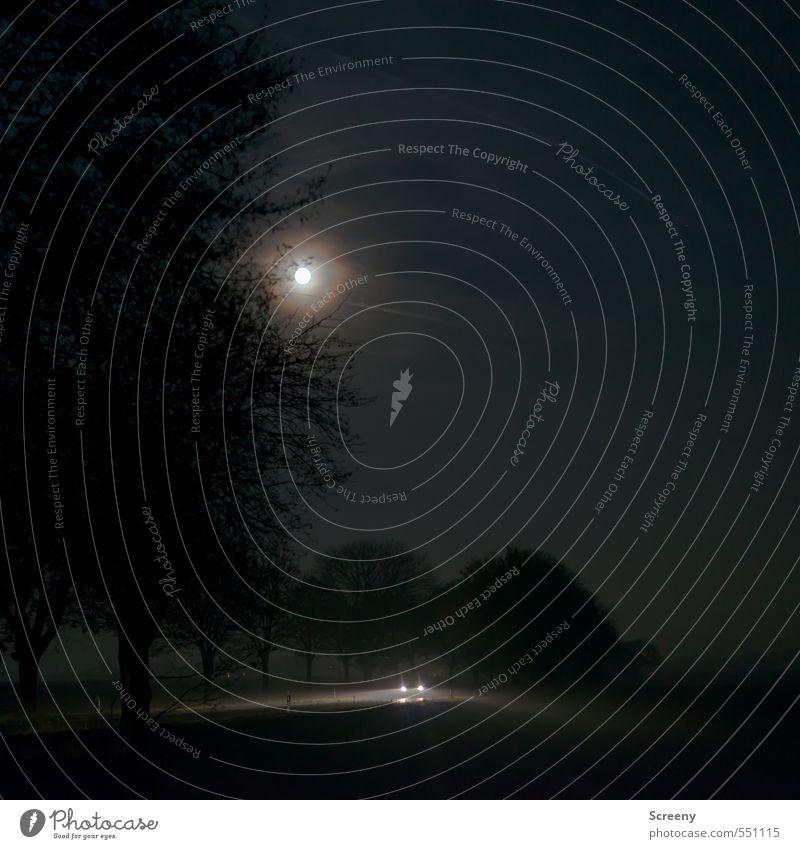 Dark is the night... Landschaft Nachthimmel Mond Herbst Baum Feld Nebel Nebelschleier Verkehrsmittel Verkehrswege Autofahren Straße PKW leuchten dunkel schwarz