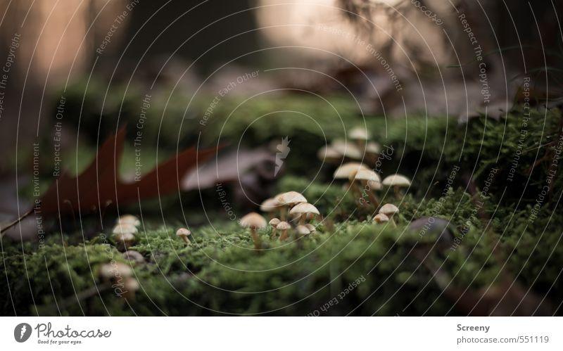 Irgendwo weit weit entfernt... Ausflug Abenteuer Natur Erde Herbst Moos Blatt Wildpflanze Pilz Wald frei klein wild braun gelb grün Stimmung Optimismus Kraft