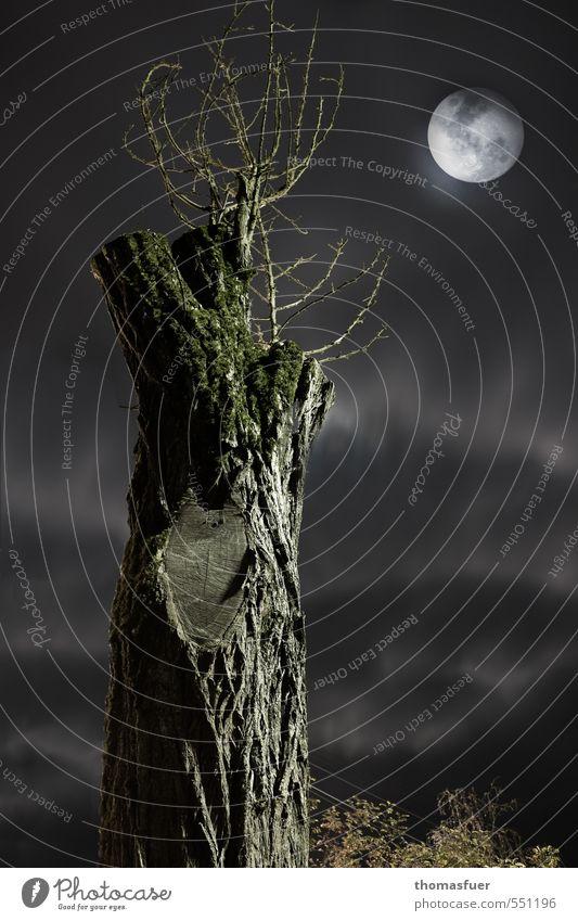 nightmare Nachtleben Natur Erde Himmel Wolkenloser Himmel Nachthimmel Mond Vollmond Herbst Baum dunkel gruselig kalt Stimmung geheimnisvoll Horizont