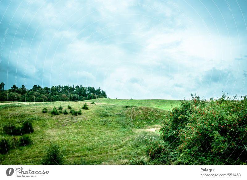 Himmel Natur Pflanze blau Himmel (Jenseits) grün schön Farbe Sommer Baum Sonne Landschaft Wolken Umwelt Frühling Wiese
