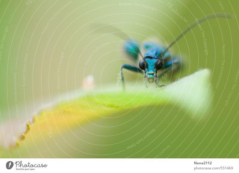 Punktsieg | Federgewichtler Gewinner Natur blau grün Pflanze Sommer Blatt Tier Wald Umwelt Wiese klein Garten Luft Park Feld sitzen