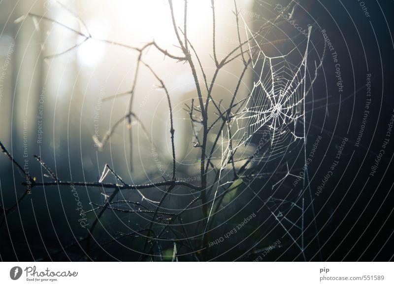netzbetreiber Natur Sonnenlicht Herbst Schönes Wetter Ast Wald Spinnennetz dunkel gruselig Angst gefährlich Falle Netz Tier Insekt Farbfoto Gedeckte Farben
